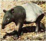 tapir-150x135